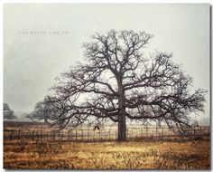 """Farmhouse Decor, Foggy Live Oak Tree Landscape, Texas Photography, Gold Grey, Moody Picture, Peaceful Farm Art. Unframed horizontal photograph of a Live Oak tree on a farm in Texas in the fog. • Borderless fine art photograph with a soft luster finish. • Available in sizes 8x10 through 30x40 (Click """"Select Options"""" menu to choose). • Watermark does not appear on final photograph."""