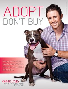 MLB star Chase Utley poses with his rescued dog to encourage people to adopt animals from shelters and never buy them.