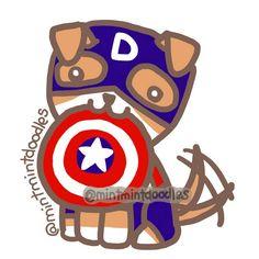 Captain Dodger! #dodger #dodgerevans #chrisevans #captainamerica #mintmintdoodles