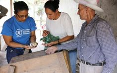 WFP promotes the empowerment of women, central pillars of operations. In Nicaragua, WFP encourages the participation of rural women projects that improve their agricultural production and access to fair markets. (WFP/Sabrina Quezada, 5 March 2015)
