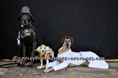 Meet our dogs...Nova is a 7.5 year old brindle Great Dane, Diego is a 4 year old black Great Dane and little Rose is an 11 year old Jack Russell Terri...
