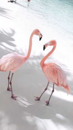 Flamingos on Beach wallpaper Flamingo Wallpaper, Ocean Wallpaper, Summer Wallpaper, Cute Wallpaper Backgrounds, Animal Wallpaper, Pretty Wallpapers, Pink Wallpaper, Aesthetic Iphone Wallpaper, Nature Wallpaper
