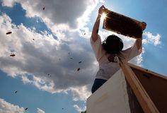 méhészkedés stílusosan :)