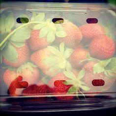 Trip to farm. we pick strawberries