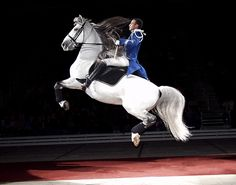 The Lipizzaner Stallion - if you ever have a chance to go to a show, it is amazing! And an incredible history of this breed!