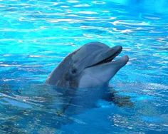 Los delfines están en peligro