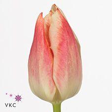 Tulips empire