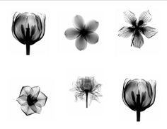 Flower Xray Tattoo | Best Flower Tattoos | Flower Tattoos Designs