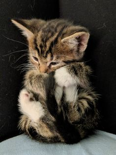 223 Likes, 3 Comments - cute baby cats Cute Baby Cats, Cute Cats And Kittens, Kittens And Puppies, Kittens Cutest, Cute Puppies, Cute Kitten Pics, Pretty Cats, Beautiful Cats, Animals Beautiful