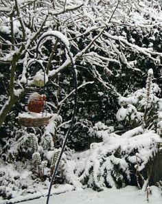 Denk aan de vogels in uw tuin.