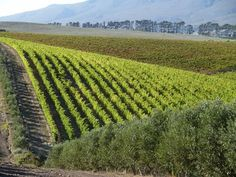 In less than a decade Domaine Des Dieux was producing award-winning wines and the first MCC in the Hemel en Aarde valley.
