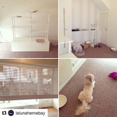 """#Repost @lalunahernebay New Shop La Luna in Herne Bay . . . . """"spent the weekend sanding units and getting some stock in. My dog Bentley seemed to like it in there!"""" #newshop #newshopintown #crystal #minerals #healingcrystals #newbeginings #hernebay #laluna"""