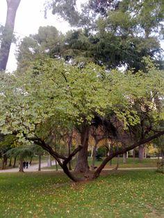 arbusto del parque del Retiro.