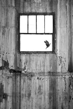 I was commissioned to produce a set of images for the Zeitz-MOCAA (Museum of Contemporary African Art) in South Africa of the abandoned grain silos (at Cape Town's working harbour) before they were. Grain Silo, Contemporary African Art, Book Photography, Paintings For Sale, Book Publishing, All Art, Abandoned, Freedom, Museum