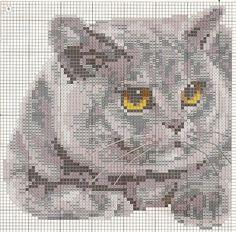 вк кот9