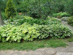 21 Ideas for Beautiful Garden Design and Yard Landscaping with Hostas – Lushome