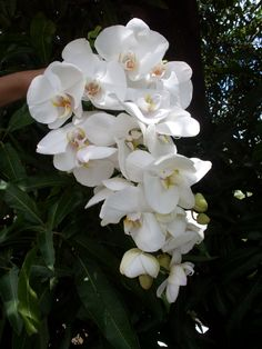 Coisa linda!!!! #orquídea                                                                                                                                                      Mais