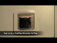 Take a look at our promotional video to find out all you need to know about the SureFlap Microchip Cat Flap! http://www.sureflap.com