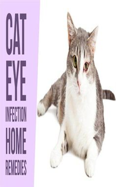 Discover causes and symptoms of cat eye infections and learn how to clear them safely by using simple and inexpensive home remedies. Kitten Eye Infection, Eye Infections, Dog Training Come, Dog Training Treats, Beaded Dog Collar, Dog Collar Tags, Dog Grooming Shop, Dog Grooming Business, Kitten Eyes