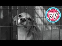 Stop the 77 - YouTube - Dog bite prevention video for families everywhere.  77% of dog bites come from a friend's dog or the family's very own dog. We want to change that number.