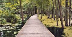 8 Breathtaking Boardwalk Trails You Must Explore In Ontario featured image