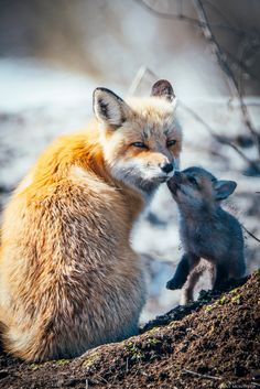 Red Foxes by Jinny Montpetit on 500px