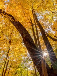 Summer is so overrated. rays beam through the in River Styx Metro Park in Medina County Photo by Jim Sommers by usatoday Discover The Forest, Epic Of Gilgamesh, Painted Leaves, Secret Places, Sunset Sky, Nature Images, Fall Photos, Nature Photography, Sun Rays