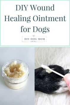 If your dog has a wound, burn or scrape this healing cream can soothe and heal skin scrapes and injuries. It is so easy to make and each of the ingredients are Doterra, Dog Hot Spots, Essential Oils Dogs, Dog Leg, Coconut Oil For Dogs, Oils For Dogs, Diy Dog Bed, Dog Care Tips, Pet Care