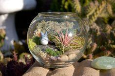 "Totoro Bowl Terrarium - ""Totoro in a Bowl"" Air Plant and Moss DIY Terrarium"