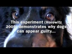 Research Groups Investigating Dogs, most are out of the country, a few are here.