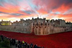 London fell silent today to remember the war dead on Armistice Day. Tower of London 11/11/14.  Ceramic poppies. Paul Cummins, Tom Piper.