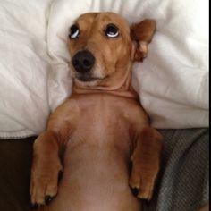 wiener dogs make me smile
