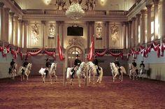 vienna equestrian school | Marc van den Berg's Blog | Everything as it appears is not as it seems ...