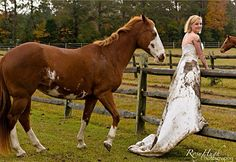 Trash That Dress!. . .Who Cares When All Eyes Are NOT On The Bride But On The Horse That She's Standing Beside! ~ Mud Weddings Photography.
