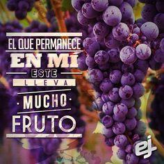 Juan 15:5 Yo soy la vid, vosotros los pámpanos; el que permanece en mí, y yo en él, éste lleva mucho fruto; porque separados de mí nada podéis hacer