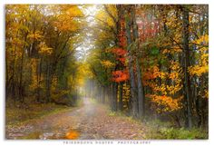 ***Autumn road (Swallow Falls State Park, Maryland) by TrieuHuong Nguyen on 500px