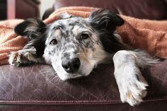 vi mettiamo a disposizione una guida sulla vecchiaia dei cani, con consigli che vi saranno di grande utilità.