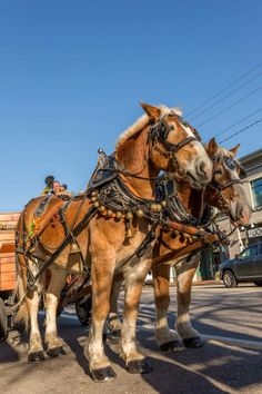 Free Horse Drawn Carriage Rides during the Northern Lights Celebration!