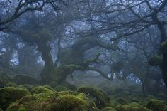 Dartmoor National Park, Devon, England Haunted forests of Dartmoor National Park in Devon, England (by Duncan George). Magic Places, Places To Go, National Geographic, Beautiful World, Beautiful Places, Haunted Forest, Haunted Woods, Dartmoor National Park, Devon England