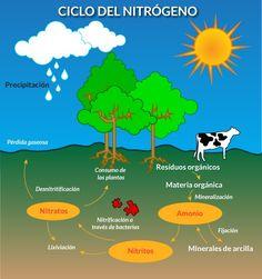 14 Ideas De Ciclos Biigeoquimicos Ciclo Del Carbono Ciclo Del Nitrógeno Ciencias Naturales