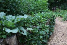 borage, parsley, and strawberries interplanted with veggies at Ashevillage Institute in Asheville, NC. Terrace Garden, Herb Garden, Garden Beds, Garden Plants, Gotu Kola, Asheville Nc, Growing Herbs, Companion Planting, Urban Farming