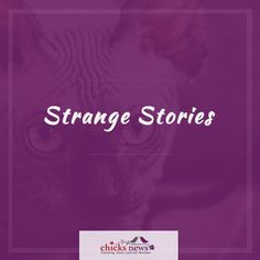Trending stories from around the web, just for women. Scary, Creepy, Strange Stories, New Trends, Real Life, History, Cool Stuff, Movie Posters, Historia