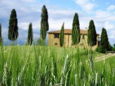 Toskana mit Kindern: mit diesen Tipps wird der Familienurlaub in der Toskana ein Erfolg. 6 exklusive Geheimtipps für den Toskana Trip