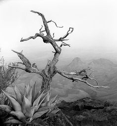 his work so captures the stark beauty of west texas.    -south rim, big bend-          james evans