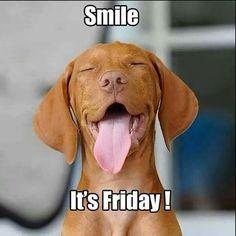 Friday cute animals friday humor, friday dog и funny dogs Funny Friday Memes, Friday Humor, Funny Memes, Hilarious, Tgif Funny, Its Friday Meme, Funny Weekend, Happy Weekend, Animal Memes