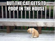 Hahahahahahaha!!!!