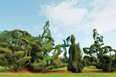 Topiary Garden in South Carolina | man named Pearl answers his doubters with an extraordinary garden.