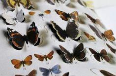 Anu Tuominen Perhosystävän perhoskokoelma