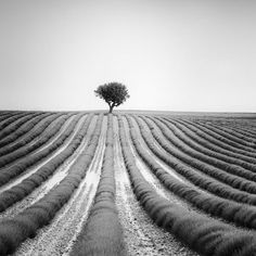 silverfineart-black-and-white-landscape-photography-gerald-berghammer Photography Projects, Fine Art Photography, Landscape Photography, Nature Photography, Symmetry Photography, Photography Hacks, Panorama Camera, Black And White Landscape, Elements Of Art