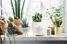 Cactussen in leuke potjes